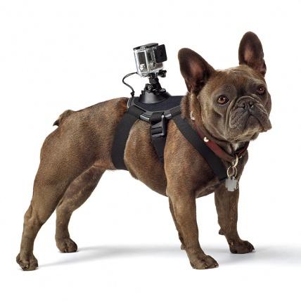gopro fetch dog harness on dog
